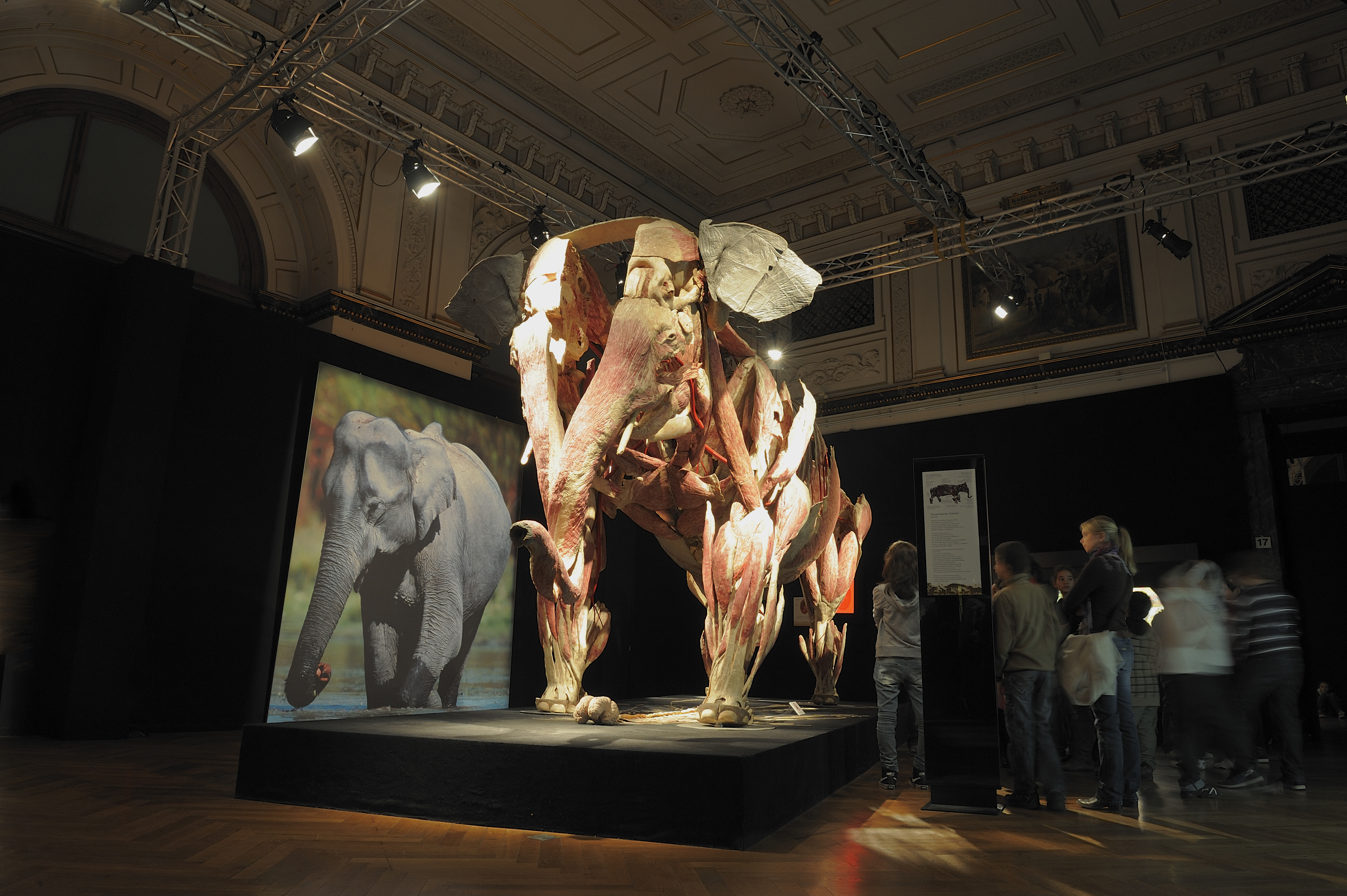BODY WORLDS – ANIMAL INSIDE OUT | Ecsite