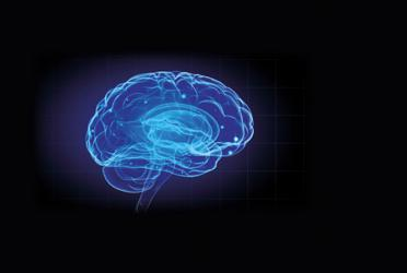 Learn all about your brain in Life's new Brain Zone