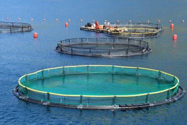 Aquaculture activity. EC_FOOD2030_Fotolia_98944908_Subscription_L_©20Didi20Lavchieva