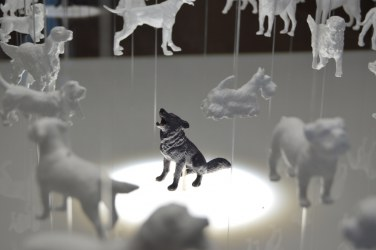 Module of artificial selection and the domestication of the dog. It highlights the wolf and shows its legacy hung over him.