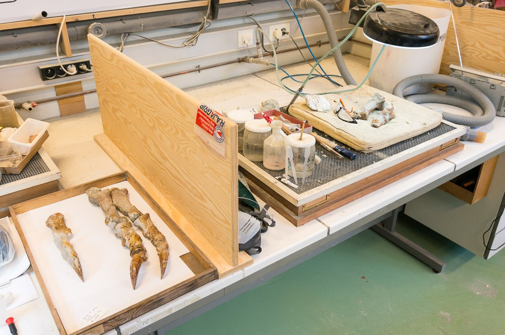 Join the Plateo-team! The Royal Belgian Institute for Natural Sciences is launching a crowdfunding campaign to mount and display a dinosaur skeleton
