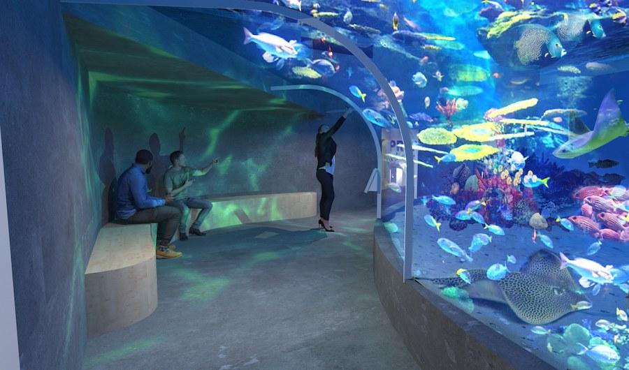 Belfast's reefLIVE Aquarium