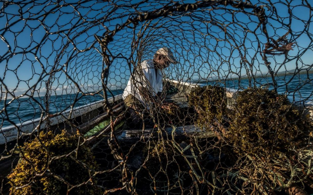 A fisher in Mauritius adds bait to a wire fish trap. Credit: Tommy Trenchard/Panos