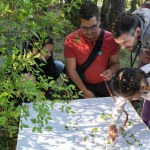BioBlitzBcn 15-17 April 2016 participants, identifying species at the Montjuïc Hill and the adjacent Botanical Garden, in an event hosted by the Natural Sciences Museum in Barcelona