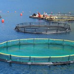 Aquaculture activity. EC_FOOD2030_Fotolia_98944908_Subscription_L_©20Didi20Lavchieva