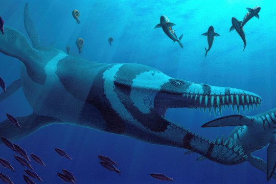 Ancient Oceans: Journey into the Jurassic