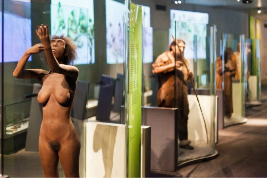 Permanent exhibition at the Neanderthal Museum- reconstruction