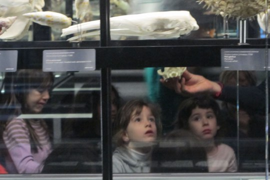 Various children at the Museu Blau (Barcelona), attentively listening to a museum educator about a skull on display. Image: Museu de Ciències Naturals de Barcelona.